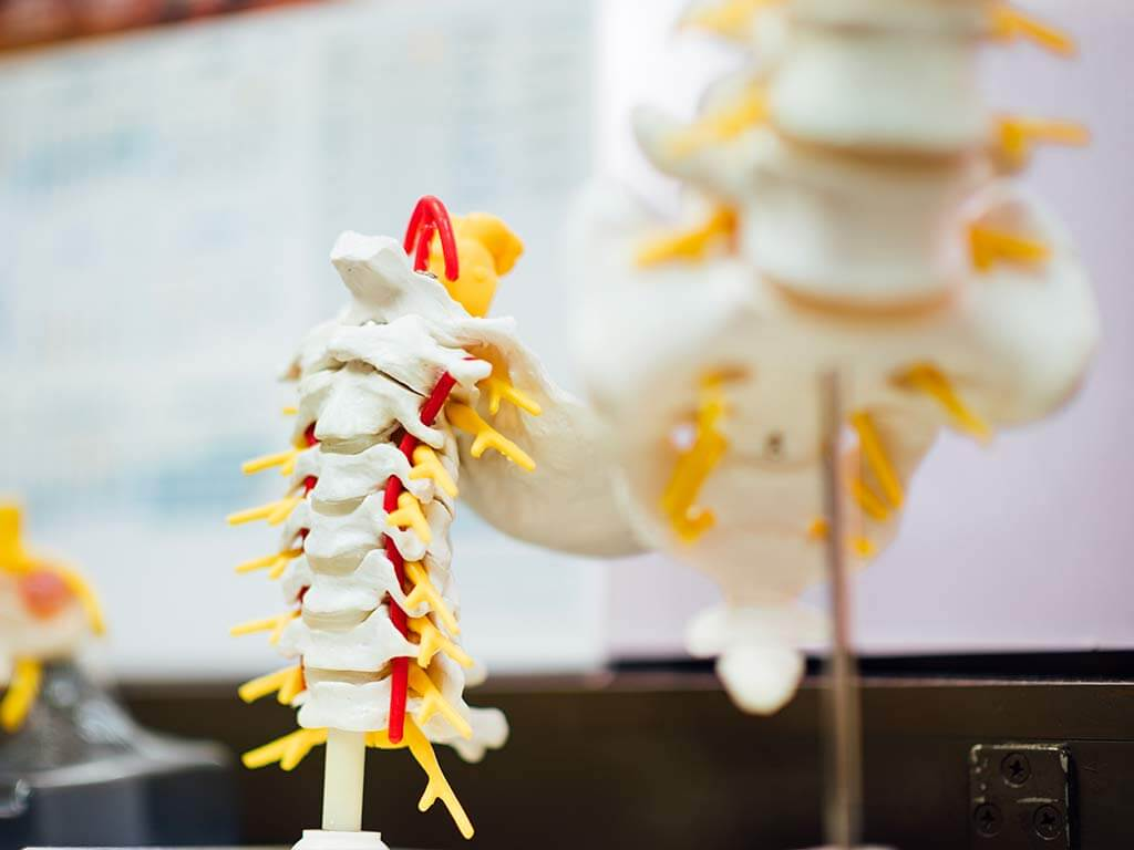 fratture vertebrali: definizione, cause e sintomi
